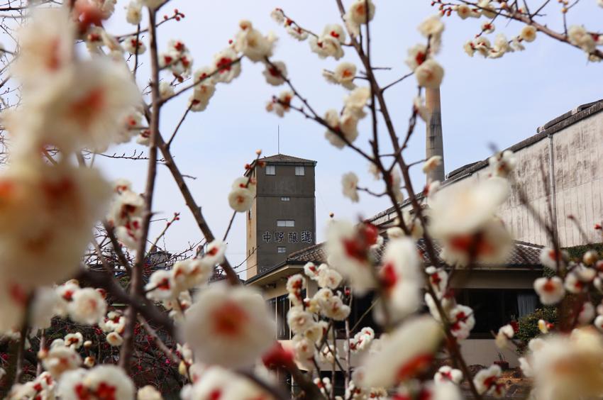 あちこち春の準備が始まっています