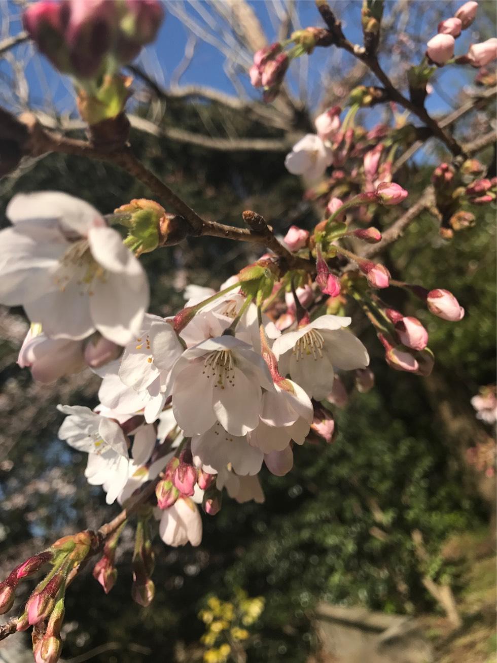 日本庭園の新しい楽しみ方発掘!!