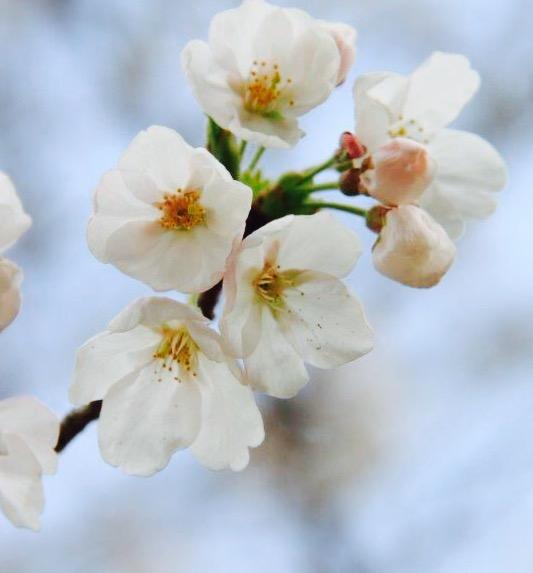 春が忍び寄ってくる心地